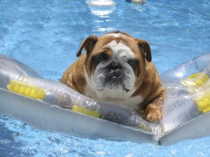 Pool heater service special-pool heater maintenance company