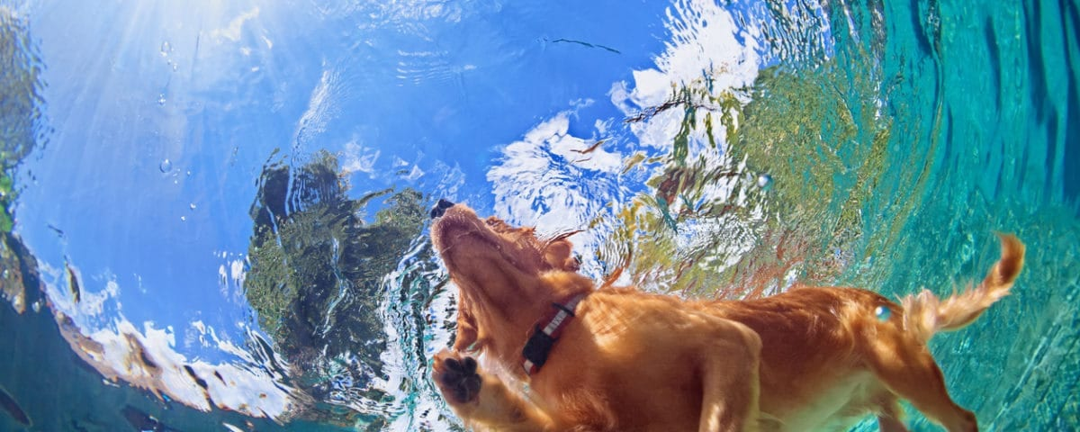 Dogs in Pools? Pros and Cons… • Superior Coop HVAC
