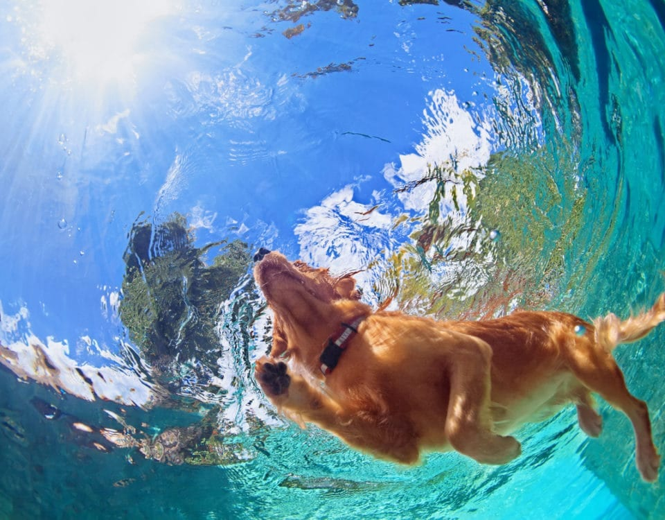 Superior CoOp HVAC-Pros and cons of dogs in swimming pools