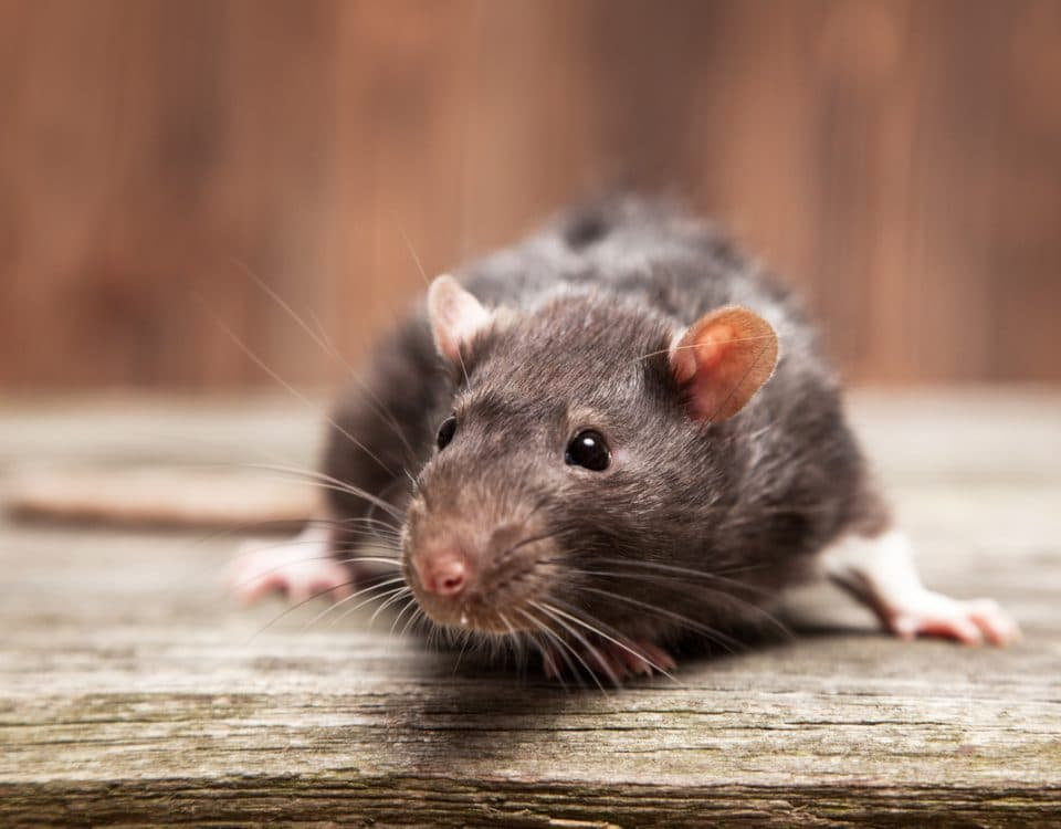 Superior CoOp HVAC-how to keep mice out of your pool heater