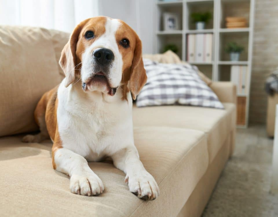 HVAC and Your Pets: How to Keep Them Safe - Superior Co-Op HVAC