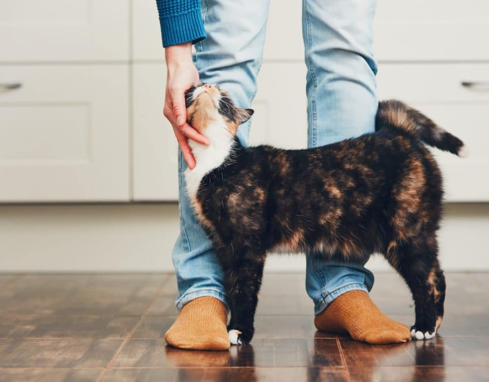 HVAC Tips For Pet Owners - Superior Co-Op HVAC, Saratoga, NY